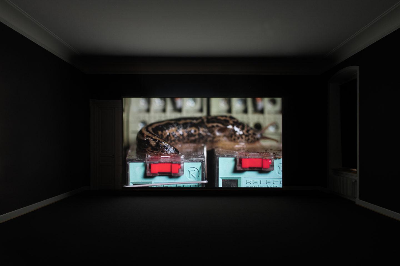 Installation View Nina Canell featuring Robin Watkins «Reflexologies / View on: Energy Budget, 2018» at Kunstmuseum St. Gallen, 2018 / Courtesy: the artist / Photo: Sebastian Stadler