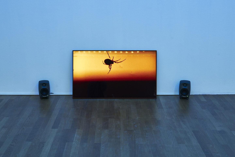 Exhibition View Michael Etzensperger Soloshow «view on Spinne, 2019» at Kunsthalle Winterthur, Winterthur, 2019 / Photo and Courtesy: Michael Etzensperger