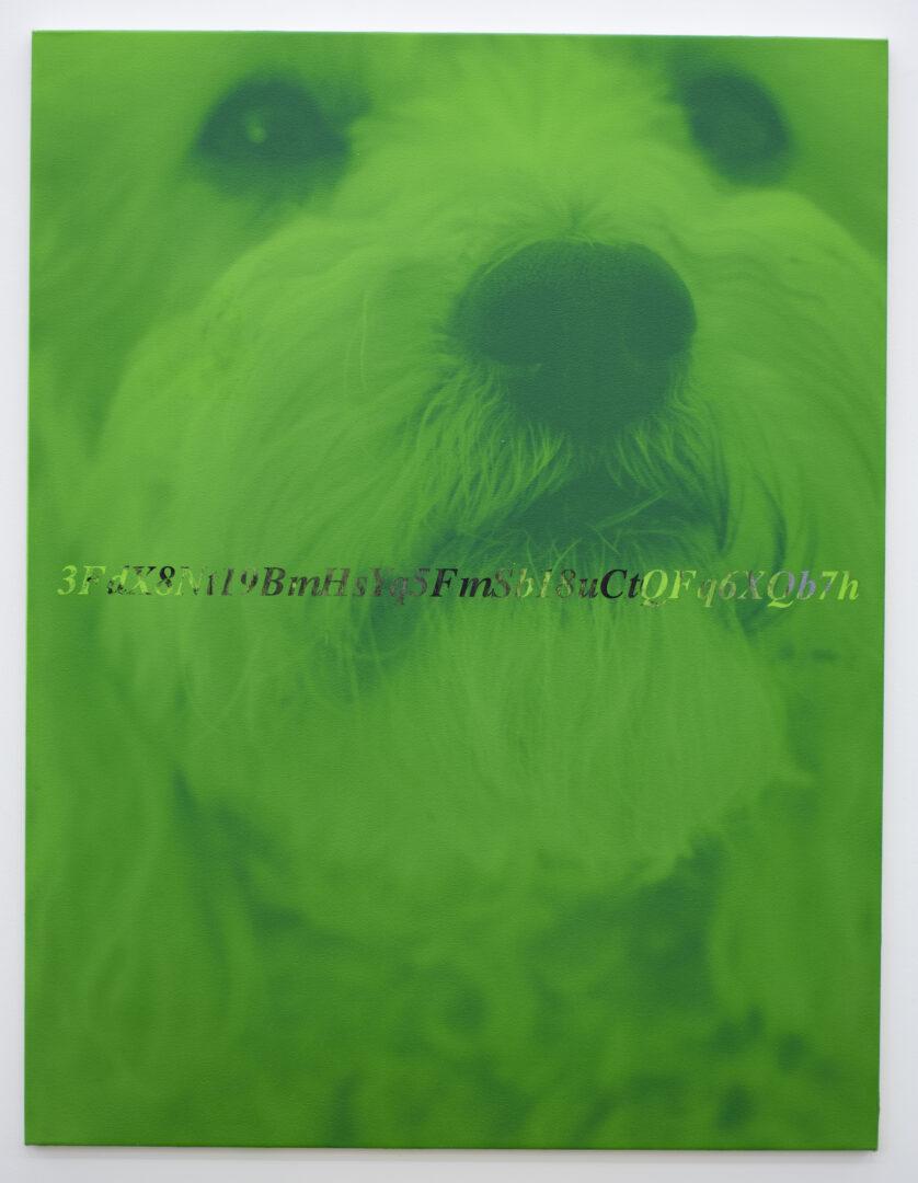 3FdX8Nt19BmHsYq5FmSb18uCtQFq6XQb7h), 2019» at Galerie Peter Kilchmann, Zurich, 2019 / Photo: Sebastian Schaub / Courtesy: the artist and Galerie Peter Kilchmann