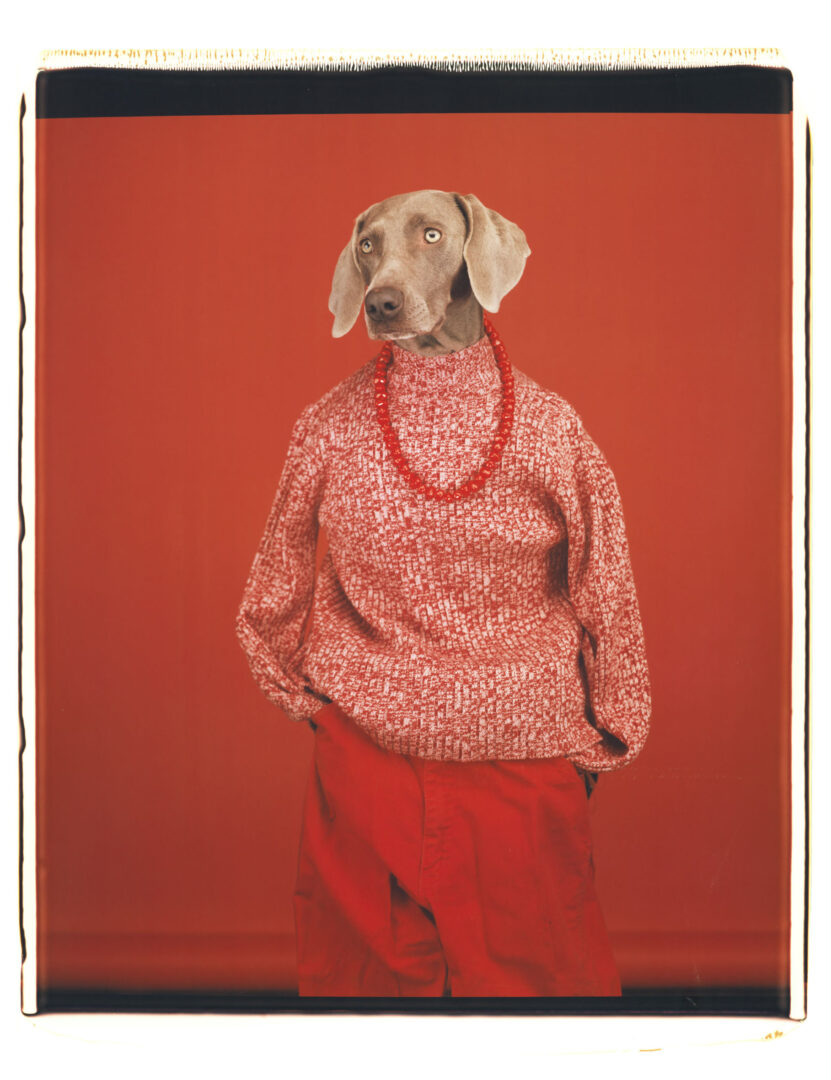 Exhibition View William Wegman Soloshow «Being Human; view on Casual, 2002» at MASI, Lugano, 2019 / © William Wegmann / Courtesy: the artist and MASI, Lugano