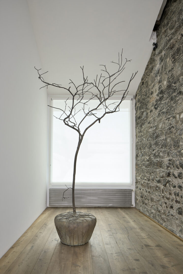 Exhibition View Groupshow «Absolutely Tschudi; view on Su-Mei Tse, Trees & Roots #4 (in collaboraton with Jean-Lou Majerus), 2011» at Galerie Tschudi, Zuoz, 2019 / Photo: Ralph Feiner, Malans / Courtesy: the artists and Galerie Tschudi, Zuoz