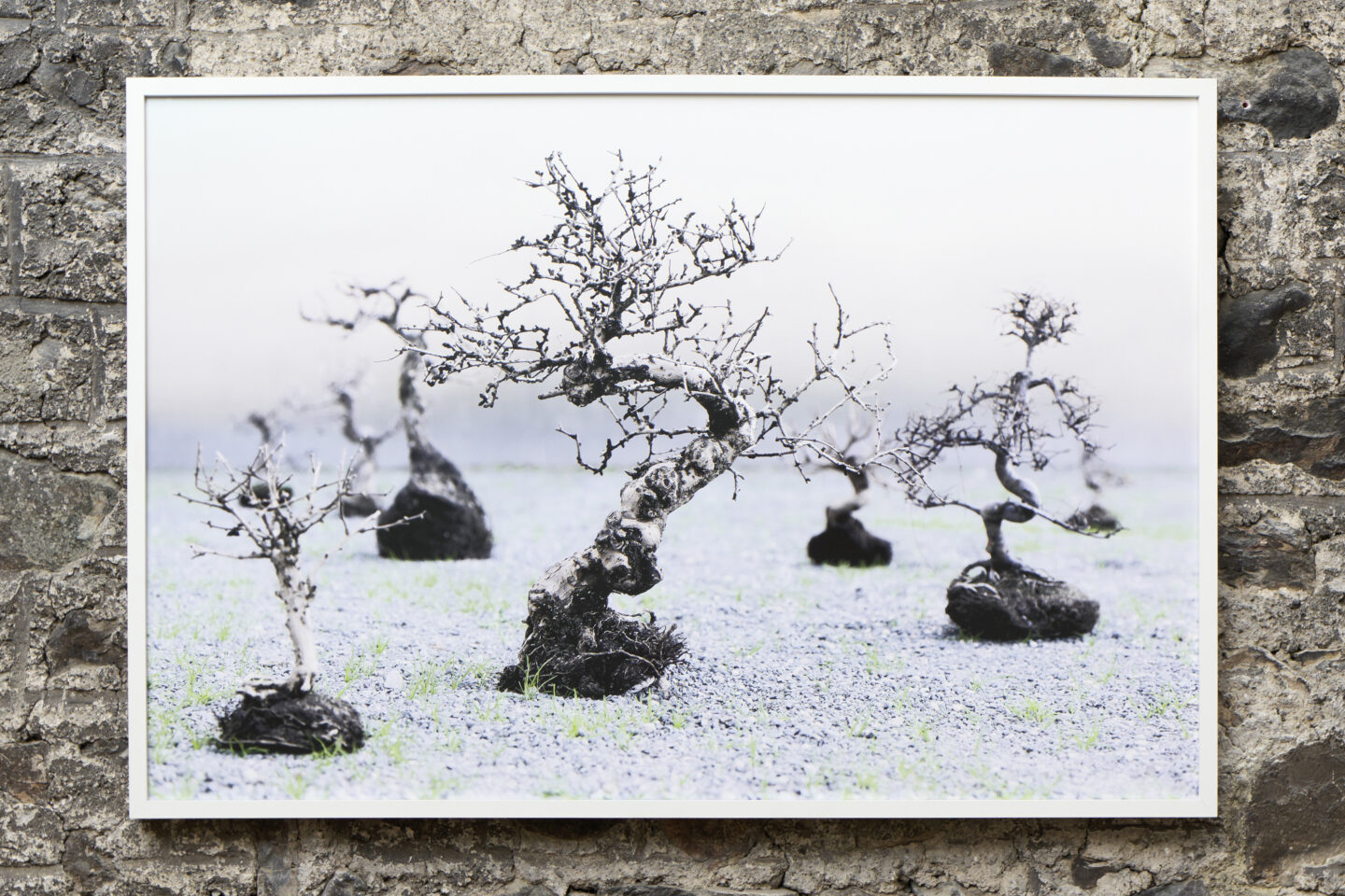 Exhibition View Groupshow «Absolutely Tschudi; view on Su-Mei Tse, Trees & Roots #2 (in collaboraton with Jean-Lou Majerus), 2011» at Galerie Tschudi, Zuoz, 2019 / Photo: Ralph Feiner, Malans / Courtesy: the artists and Galerie Tschudi, Zuoz