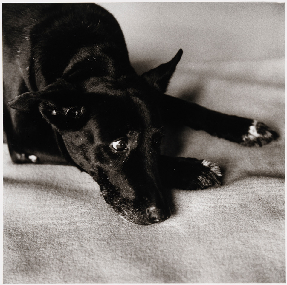 Exhibition View Peter Hujar & Paul Thek Joint Exhibition (view on Peter Hujar, Clarissa Dalrymple's Dog, Kirsten, 1984) at Mai 36 Galerie, Zurich, 2020 / © The Estate of Peter Hujar / Courtesy: Mai 36 Galerie, Zurich